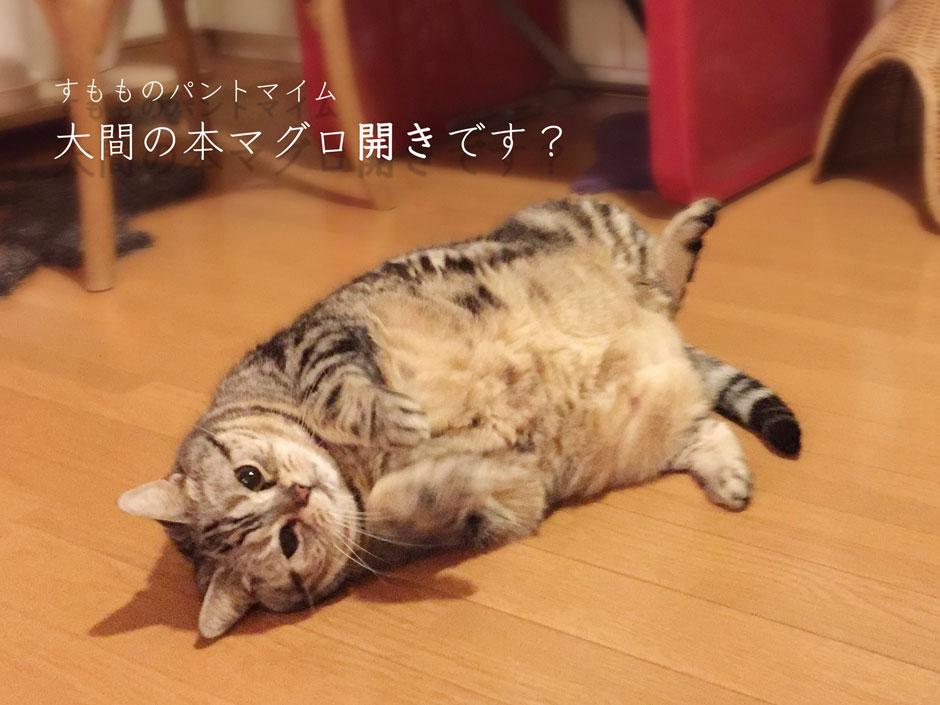 sumomo365_20180314_940_B.jpg