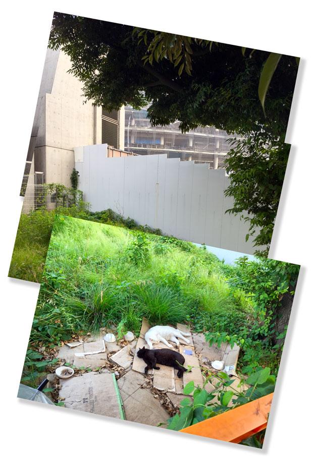 sumomo365_201806_kokuritu_cats_04.jpg