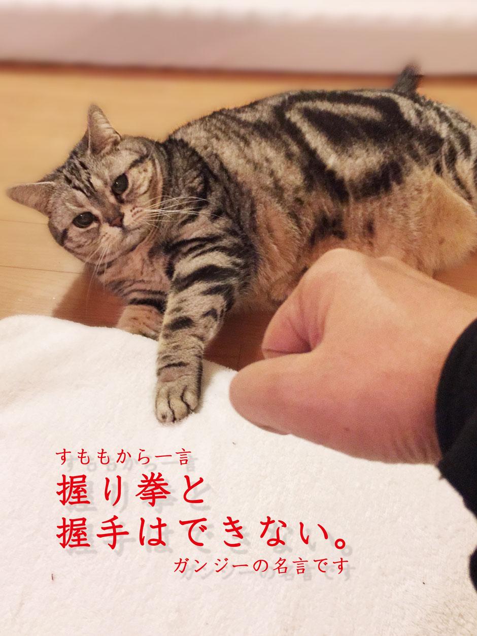 sumomo365_20180305_nigirikobushi.jpg
