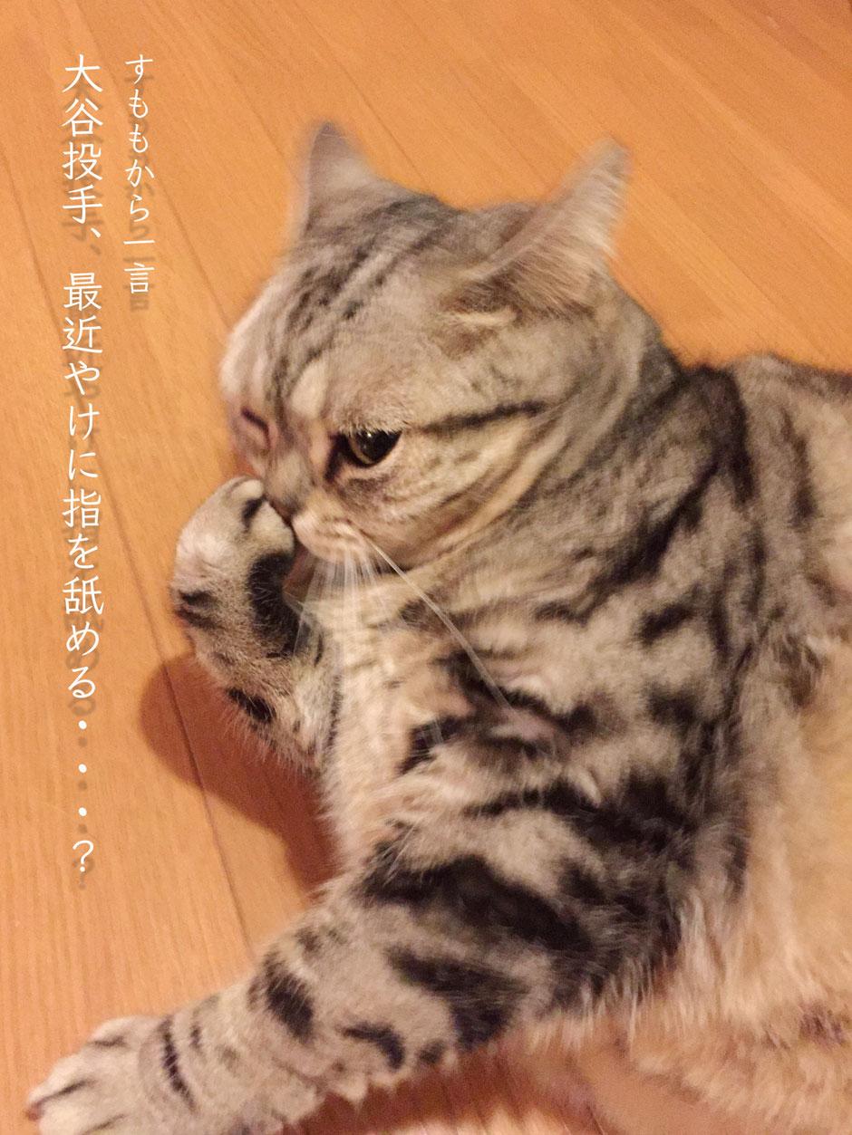 sumomo365_201804_Ootani_00.jpg