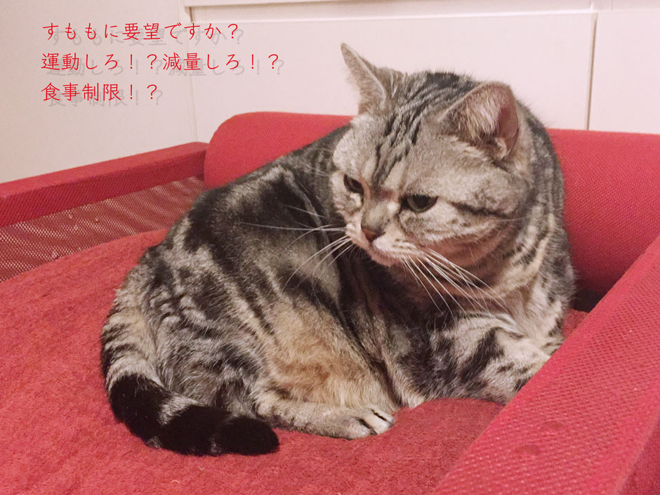 sumomo365_201804_diet_00.jpg