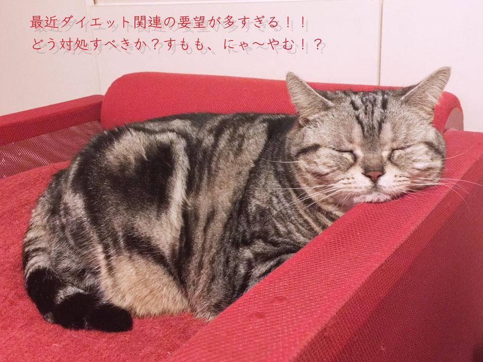 sumomo365_201804_diet_03.jpg