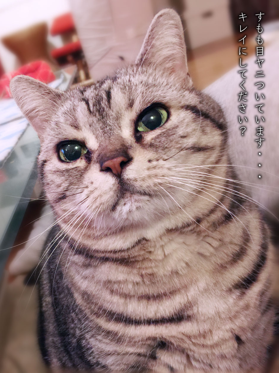 sumomo365_201804_meyani.jpg