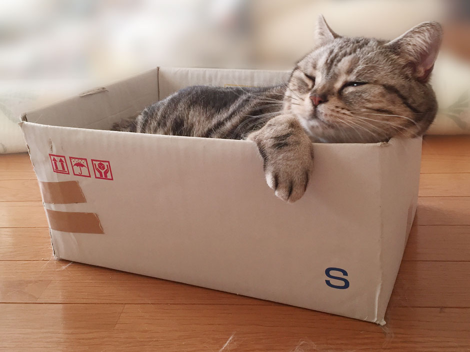 sumomo365_201805_Cardboard_02.jpg