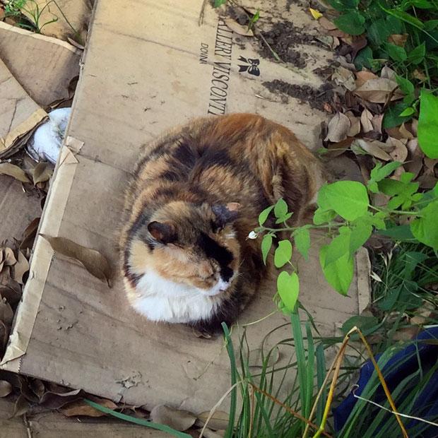 sumomo365_201806_kokuritu_cats_01.jpg