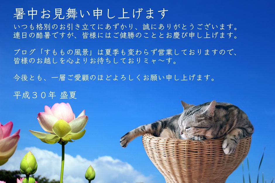 sumomo365_201807Lotus_00_b.jpg