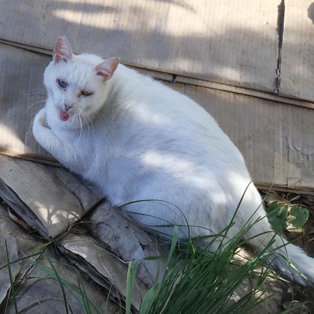 sumomo365_201808_kokuritu_cats_01.jpg