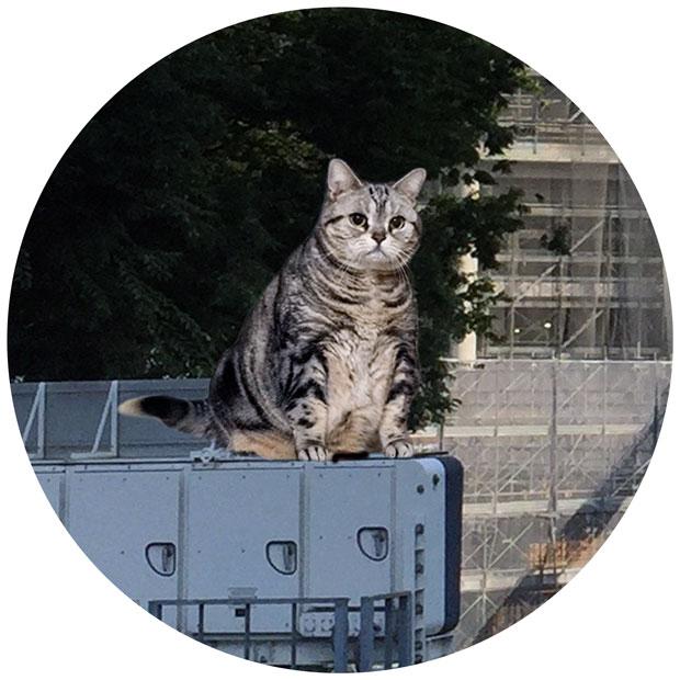 sumomo365_201808_kokuritu_cats_05_04.jpg