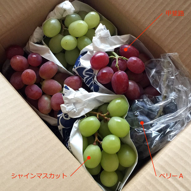 sumomo365_201810_Grape_Thanks_04a.jpg