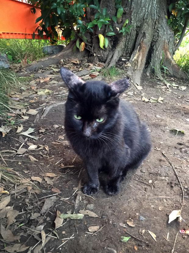 sumomo365_201810_kokuritu_cats_01.jpg