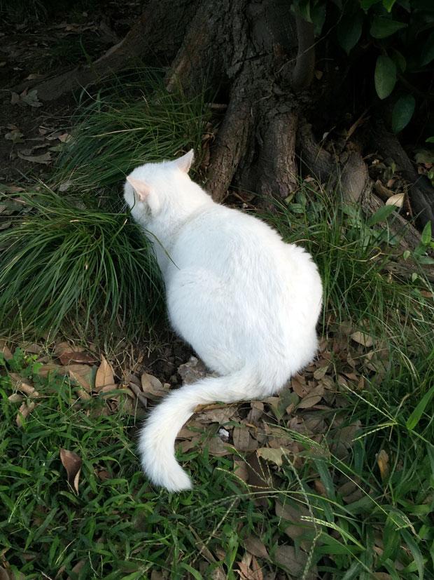 sumomo365_201810_kokuritu_cats_02.jpg