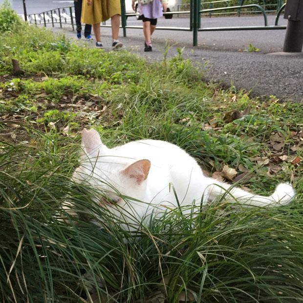sumomo365_201810_kokuritu_cats_03.jpg