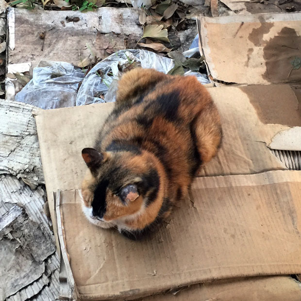 sumomo365_201810_kokuritu_cats_04.jpg