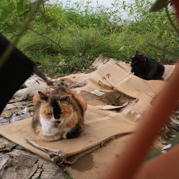 sumomo365_201810_kokuritu_cats_05.jpg