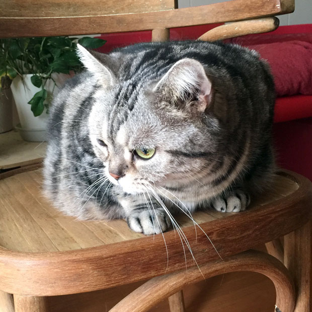 sumomo365_201810_kokuritu_cats_06.jpg