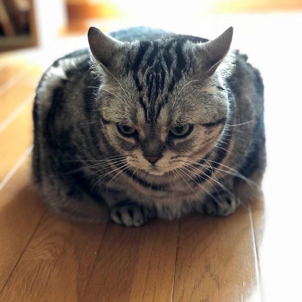 sumomo365_201811_Square_Sumomo.jpg