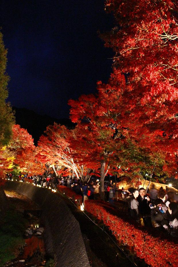 sumomo365_201811_kawaguchiko_02.jpg