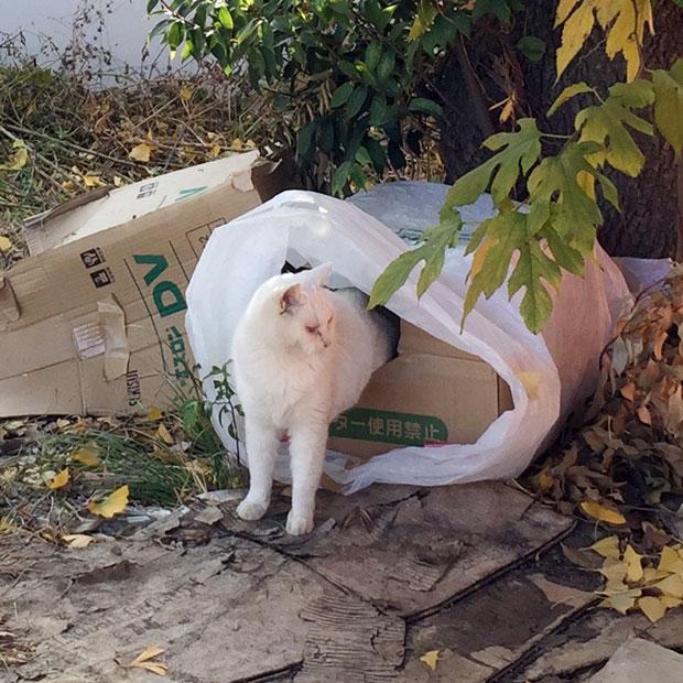 sumomo365_201811_kokuritu_cats_01.jpg