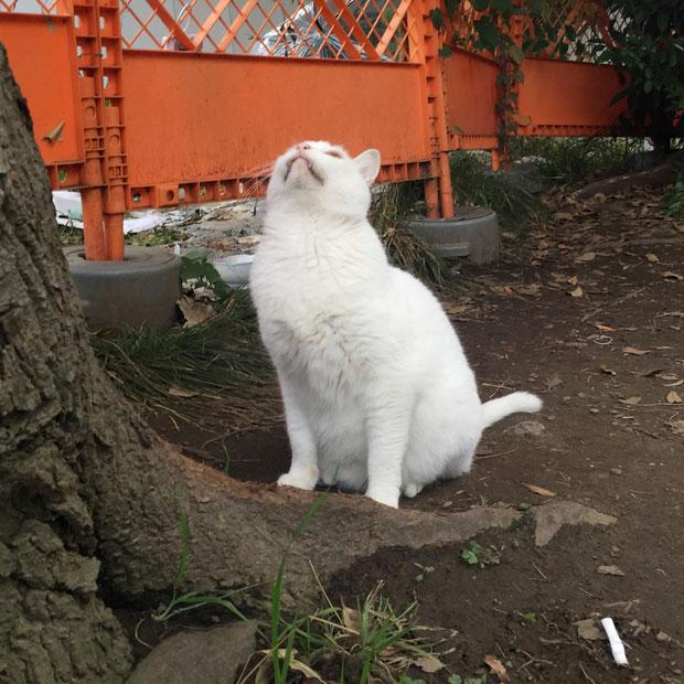 sumomo365_201811_kokuritu_cats_03.jpg
