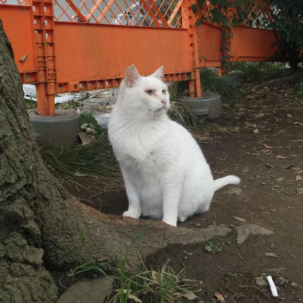 sumomo365_201811_kokuritu_cats_04.jpg