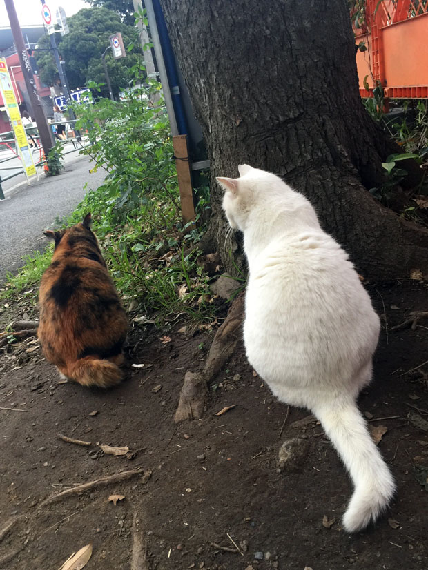 sumomo365_201811_kokuritu_cats_05.jpg