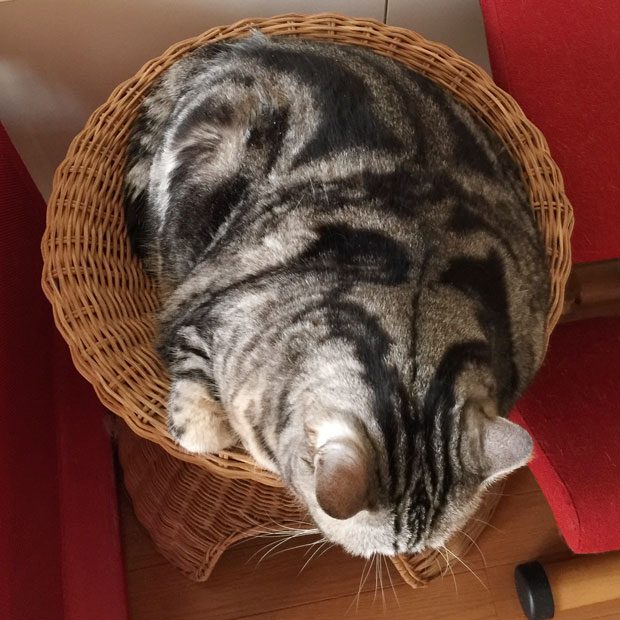 sumomo365_201811_kokuritu_cats_09.jpg