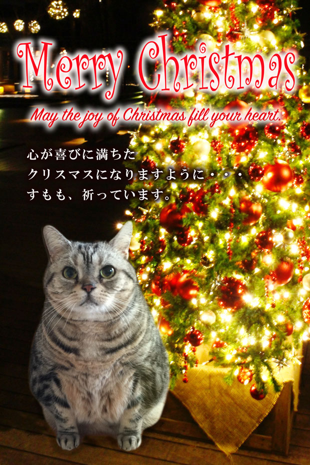sumomo365_201812_Christmas_00.jpg