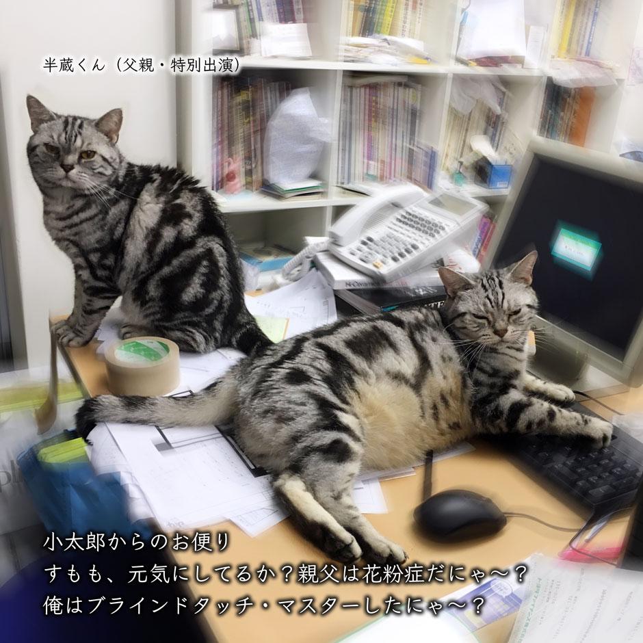 sumomo365_2018_kotaroo_01.jpg