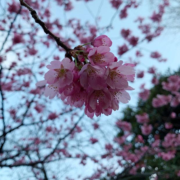 sumomo365_201903_Park_02.jpg