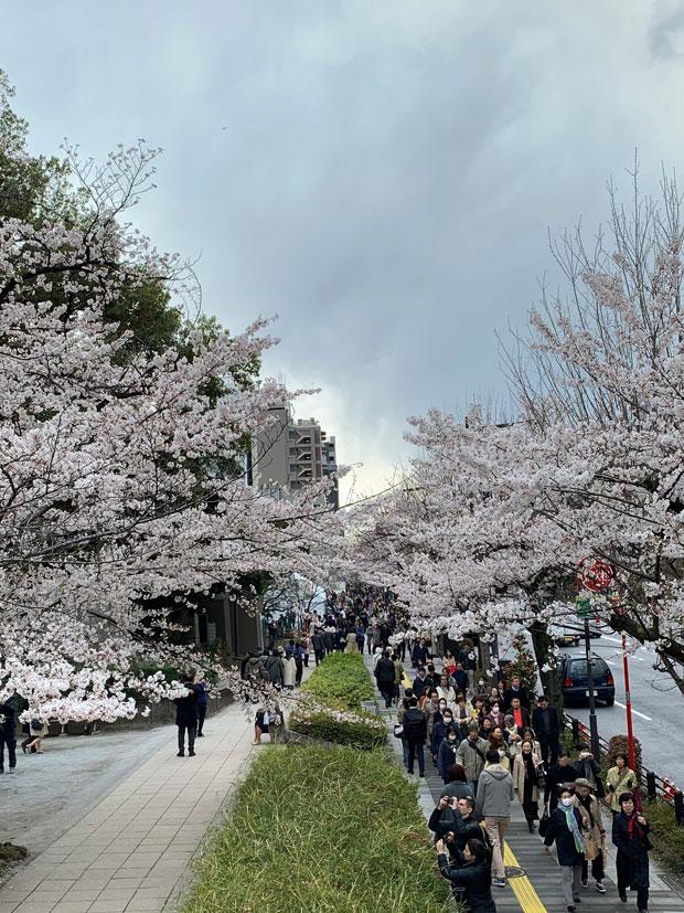 sumomo365_201904_Sakura_02.jpg