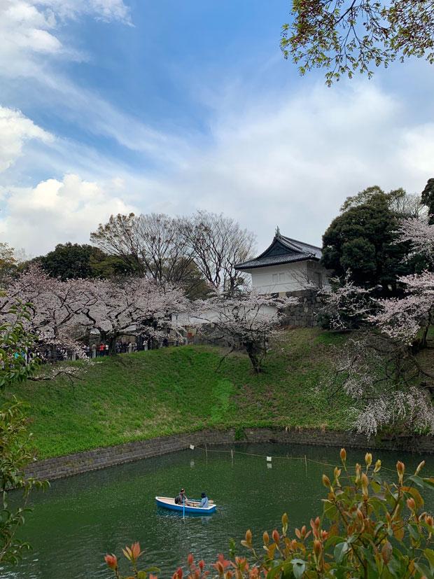 sumomo365_201904_Sakura_03.jpg