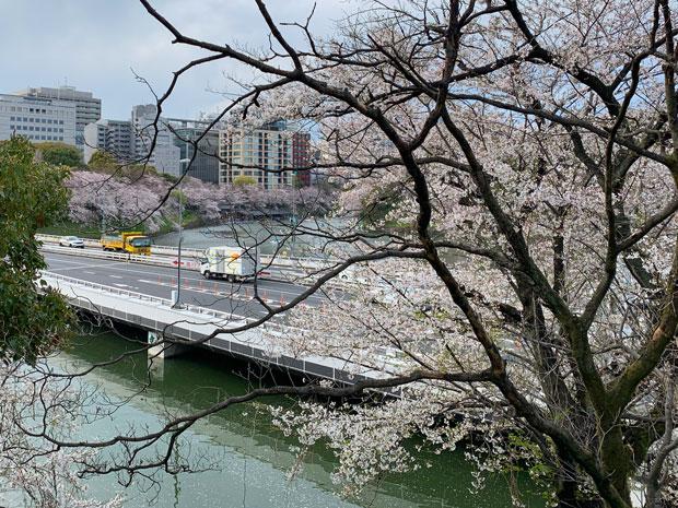 sumomo365_201904_Sakura_08.jpg
