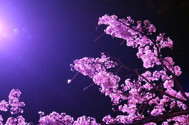 sumomo365_201904_letter_03.jpg