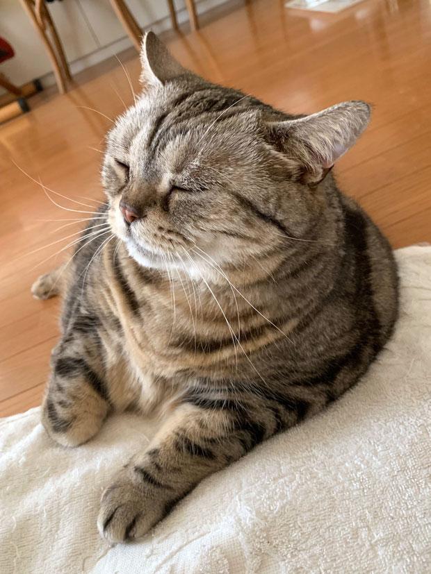 sumomo365_201905_Petition_01.jpg