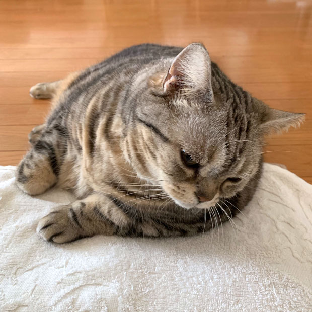 sumomo365_201905_Petition_02.jpg