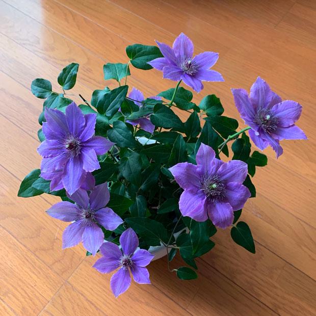 sumomo365_201905_shiko_03.jpg