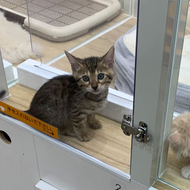 sumomo365_201905_shine02_Kitten_blue.jpg