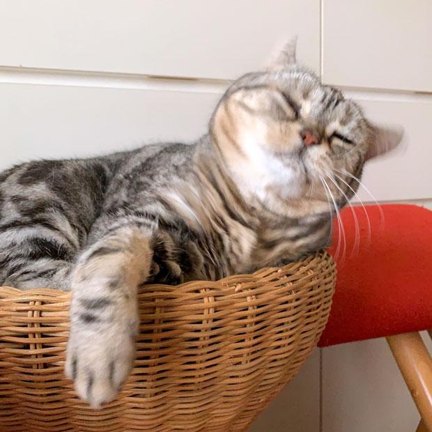 sumomo365_201907_Cat_drill_01.jpg