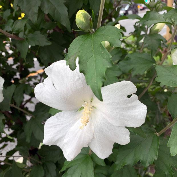 sumomo365_201907_flower_01.jpg