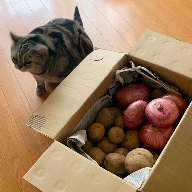 sumomo365_201907_potato_onion_00.jpg