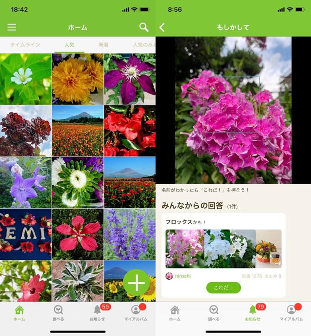 sumomo365_201908_GreenSnap_03.jpg