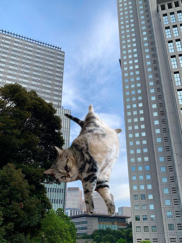 sumomo365_201908_Handstand_01.jpg