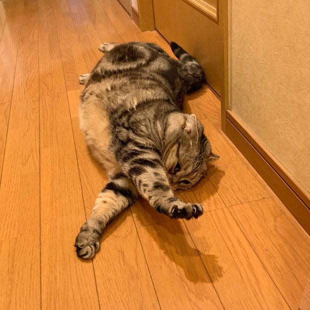 sumomo365_201908_sleep_stretch_03.jpg